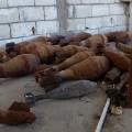 Syria oil isis 5