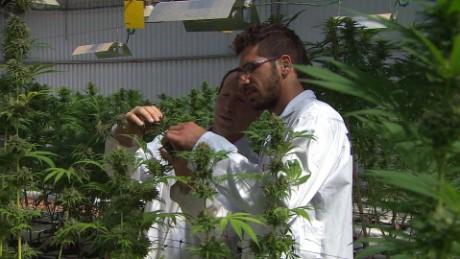 kosher cannabis israel pkg liebermann_00002730