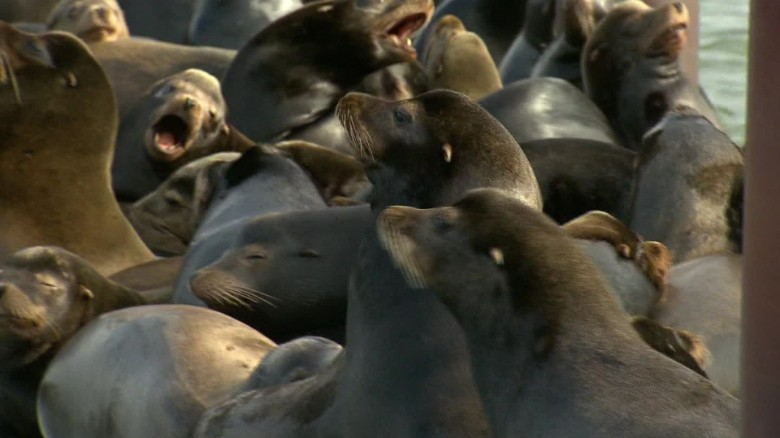 Sea lions taking over Oregon town