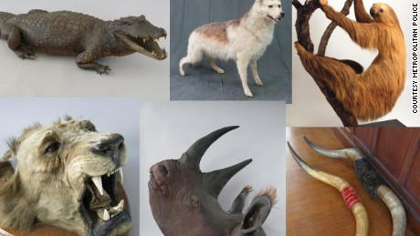 The stolen stuffed animals include a sloth, a rhinoceros and a crocodile.