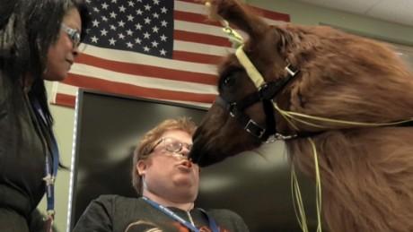 """The llama """"carrot kiss."""""""