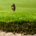 owl rio tease