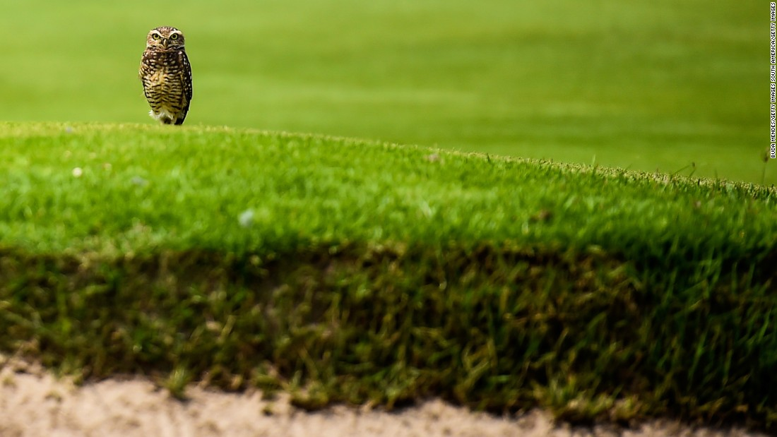 The test event drew plenty of interest ... not least from this owl.