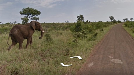 Go on a South African safari with Google
