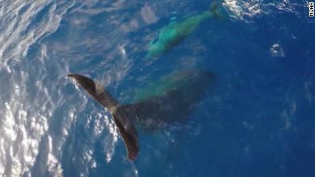 cnnee vo un dron vigila a una ballena en mar abierto _00001815
