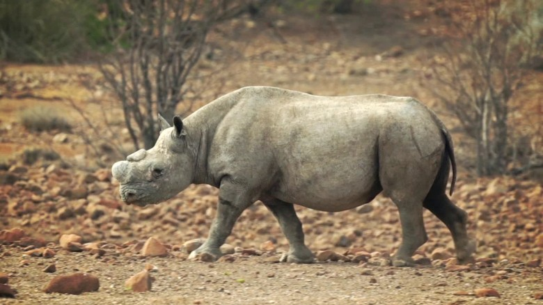 Go on safari in Namibia and Botswana