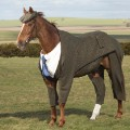 Tweed Horse 5: Horse standing alone