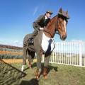 Tweed Horse 1