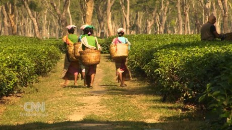 cfp trafficked for tea spc_00021413.jpg