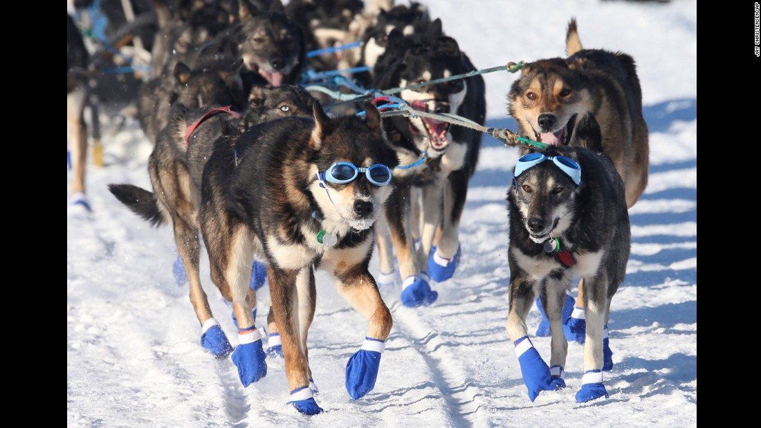 The lead dogs of rookie musher Cody Strathe of Fairbanks make their way through Long Lake, Alaska, during the 44th Iditarod on March 6.