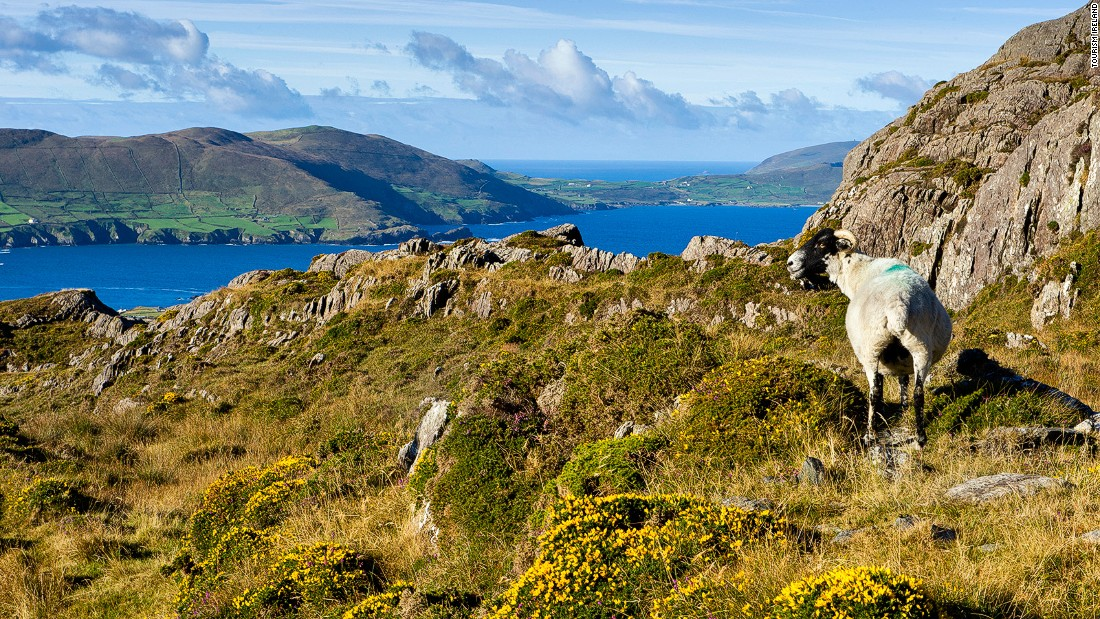 The Allihies Copper Mine Trail is a walking route around the wild Beara Peninsula, with spectacular mountain and sea views.