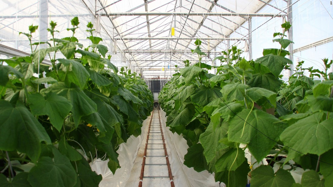 The SFP - a Norwegian social enterprise - will use core technologies that convert abundant resources into scarce ones, such as through the use of seawater to cool greenhouses and allow year-round cultivation of crops, as has been successfully demonstrated with similar techniques in Qatar.