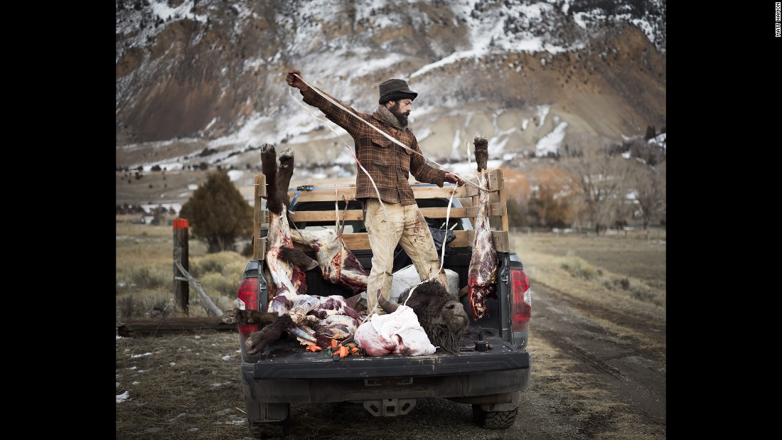 Josh loads buffalo quarters into a Native American hunter's truck.