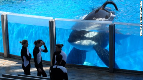 What will happen to SeaWorld orcas still in captivity?