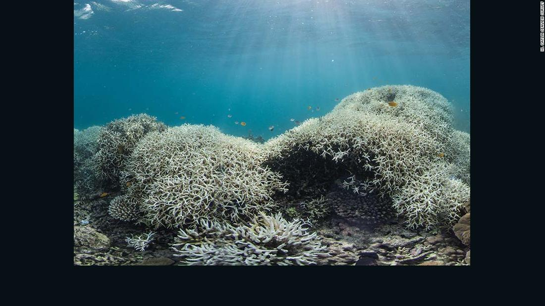 Dramatic coral bleaching, seen in Australia's Great Barrier Reef from March 2016.