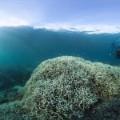 coral bleaching 3