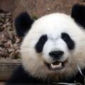 IYW_Panda_07