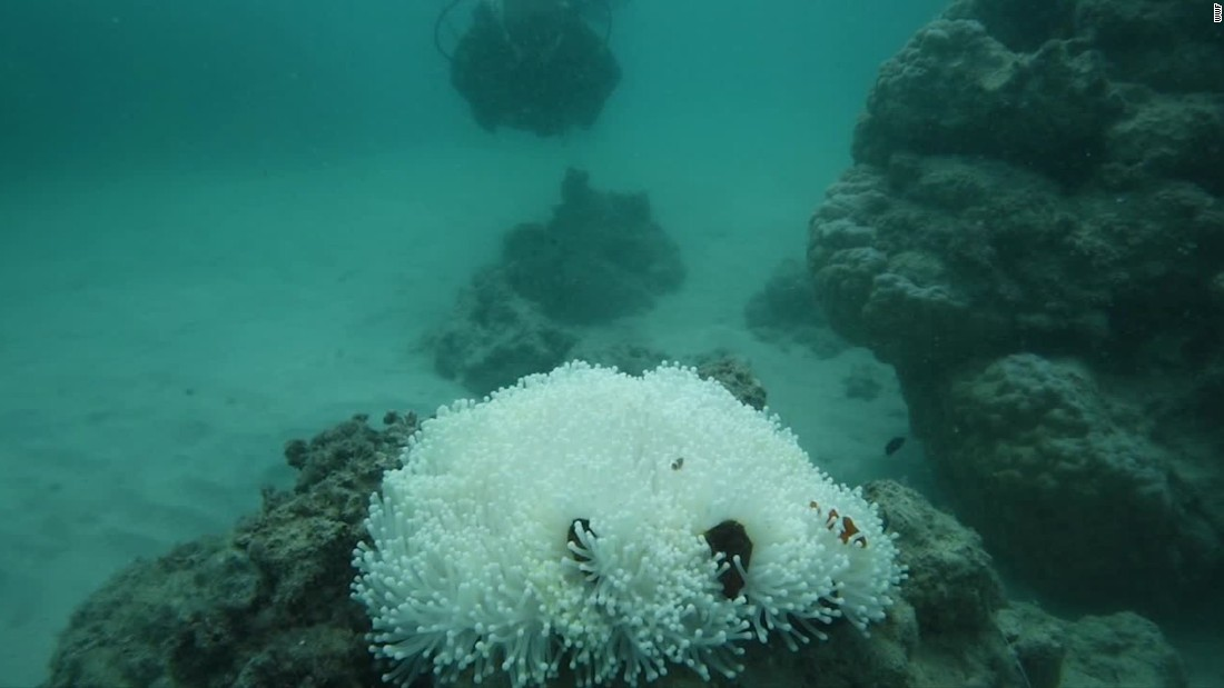 """At some reefs, the final death toll is likely to exceed 90%,"" Andrew Baird, of the ARC Center of Excellence for Coral Reef Studies, says."