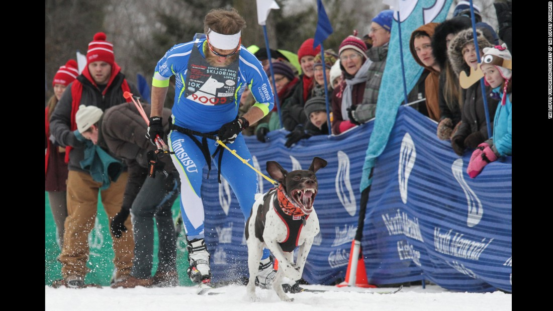 There are official skijoring competitions in the U.S., Canada, Europe and elsewhere.