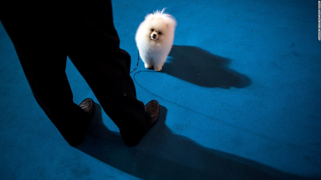 A man stands with his dog Friday, March 18, during a competition at the Shanghai International Pet Expo in Shanghai, China.