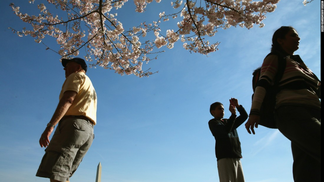 The festival marks the 1912 gift from Tokyo of 3,000 cherry trees to Washington.