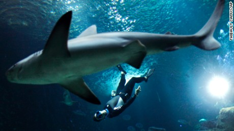 The four times Apnea world record holder, Pierre Frolla, dives near a shark, at the Aquarium of Paris.
