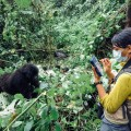 gorilla fossey fund 01