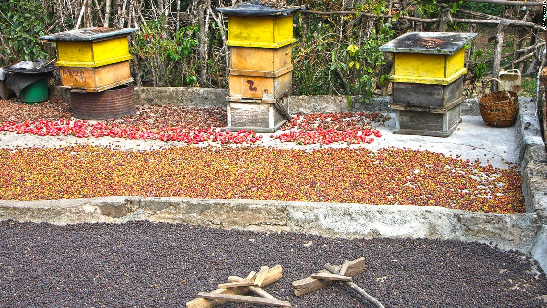 Beehives sit beside coffee drying in the sun at a local homestead in the forest.
