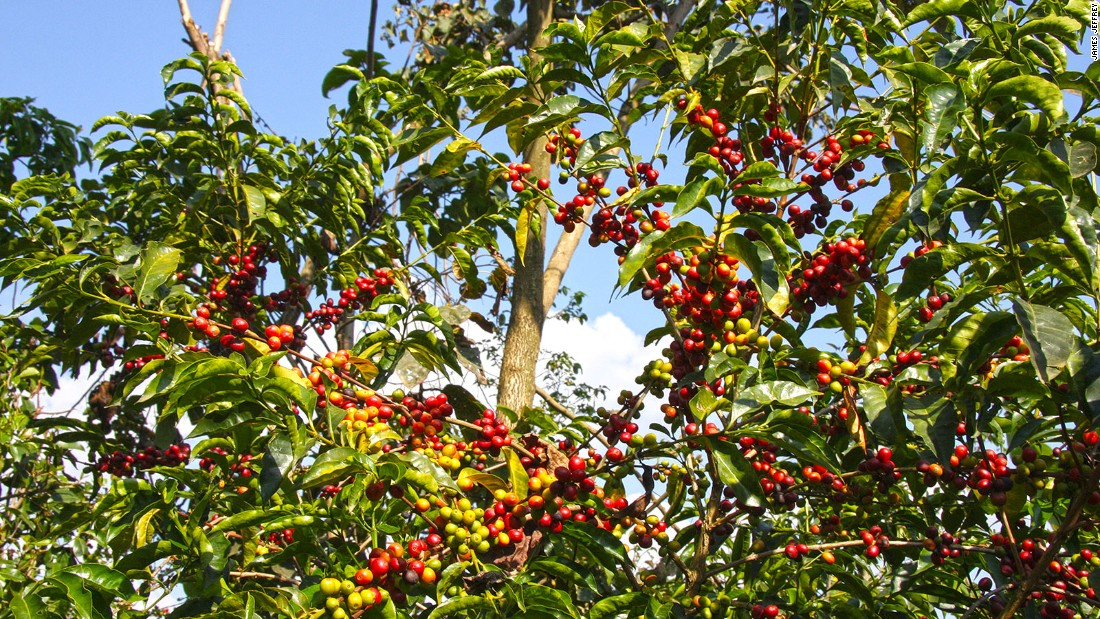 Bonga in Ethiopia is claimed as the birthplace of Arabica coffee. Despite the drink's success, the region largely remains a backwater, although Ethiopia's tourism chiefs are now hoping to bring in more visitors.