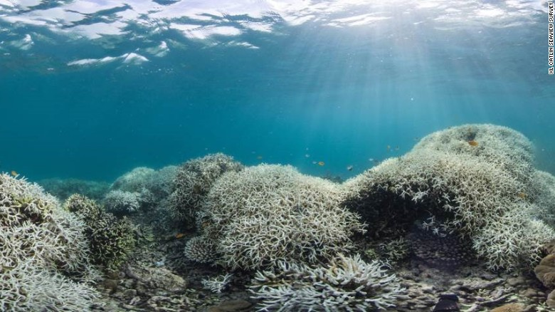 Great Barrier Reef loses record high coral