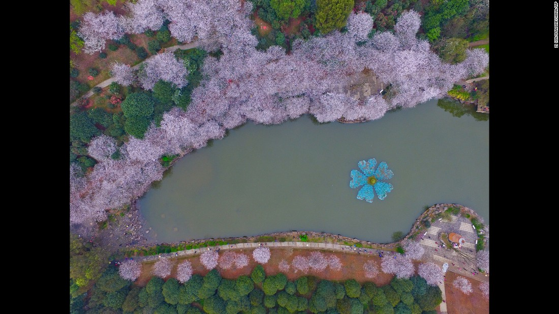 It's not just Japan -- China loves its cherry blossoms, too. This Cherry Blossom Festival was held in Hunan Forest Botanical Garden in March 2016.