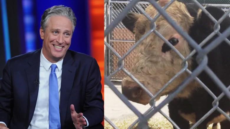 Jon Stewart rescues runaway bull orig vstop dlewis_00000000