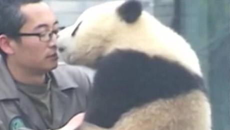 cnnee vo rec cachorro de panda posa para los selfies _00000519