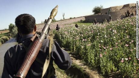 An Afghan policeman patrols a poppy field.