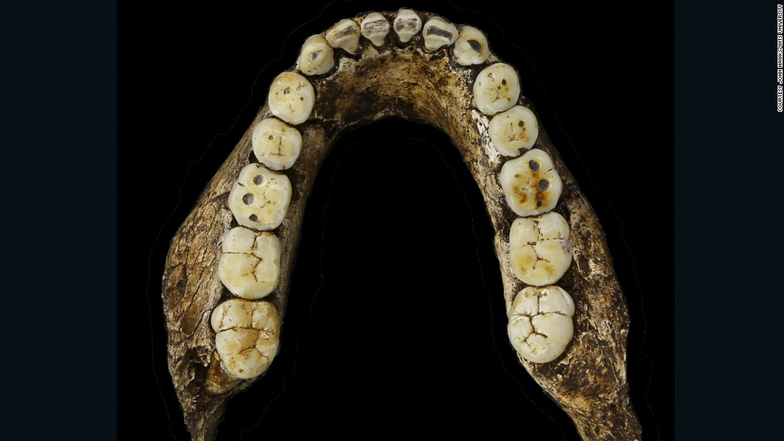 Homo naledi's teeth were small, and described as in-keeping with the genus Homo.