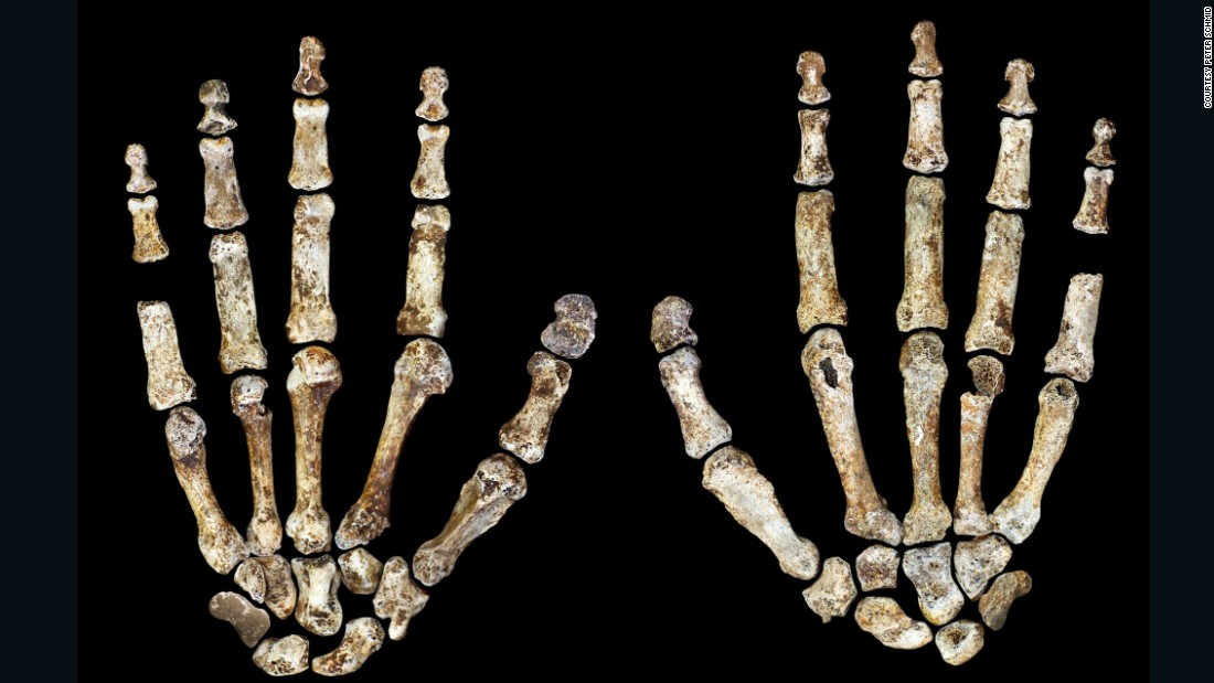 The ancient human also had curved ape-like fingers, which could have been used for climbing.