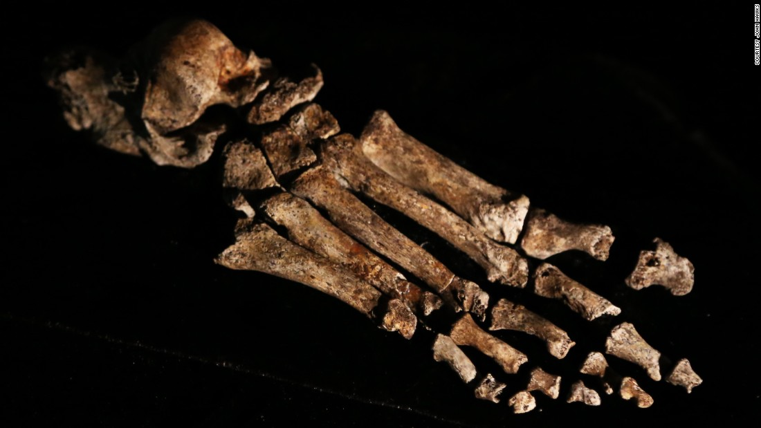 "It's feet are ""virtually indistinguishable from those of modern humans,"" said Dr William Harcourt-Smith of Lehman College, City University of New York. This, combined with long slender legs, mean the species may have been capable of walking vast distances."