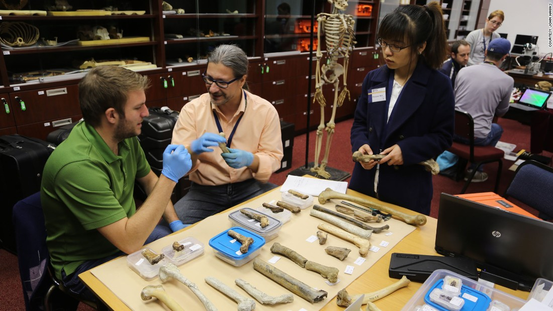 Pictured, a team of scientists assess the bounty of bones back in the lab.