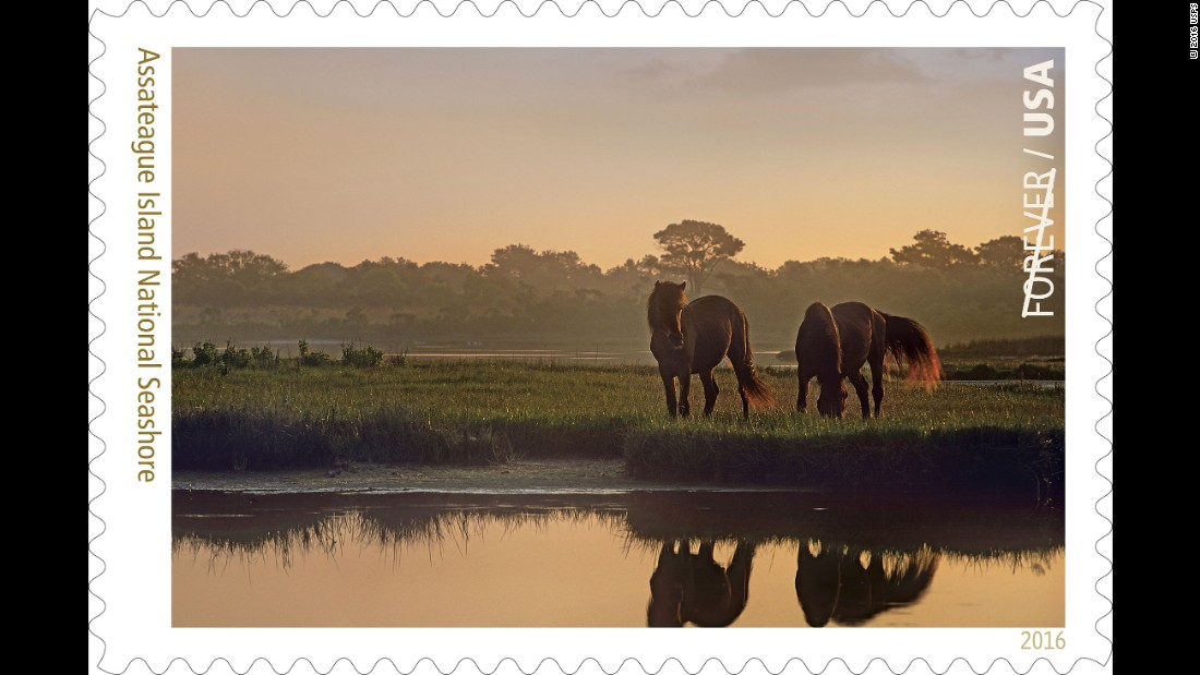 Bands of wild horses are the main attraction at Maryland's and Virginia's Assateague Island National Seashore, a barrier island in the states of Maryland and Virginia.
