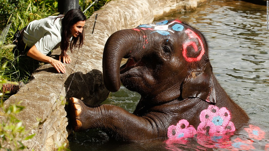 Songkran isn't just about splashing, and the merrymaking doesn't only happen in Thailand. Three female Asian elephants -- including Tukta (pictured) -- are painted to recognize the New Year in Sydney's Taronga Zoo.