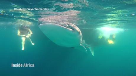 inside africa djibouti whale sharks spc a_00010724