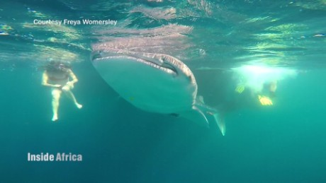 inside africa djibouti whale sharks spc a_00010724.jpg