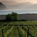 C_Franciacorta-wine-consortium_ALDOPADOVAN