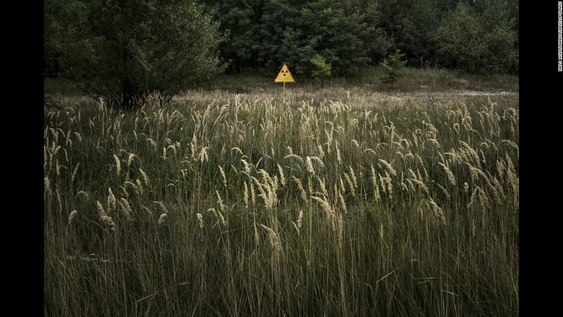 A radioactive field near the Chernobyl nuclear power plant.