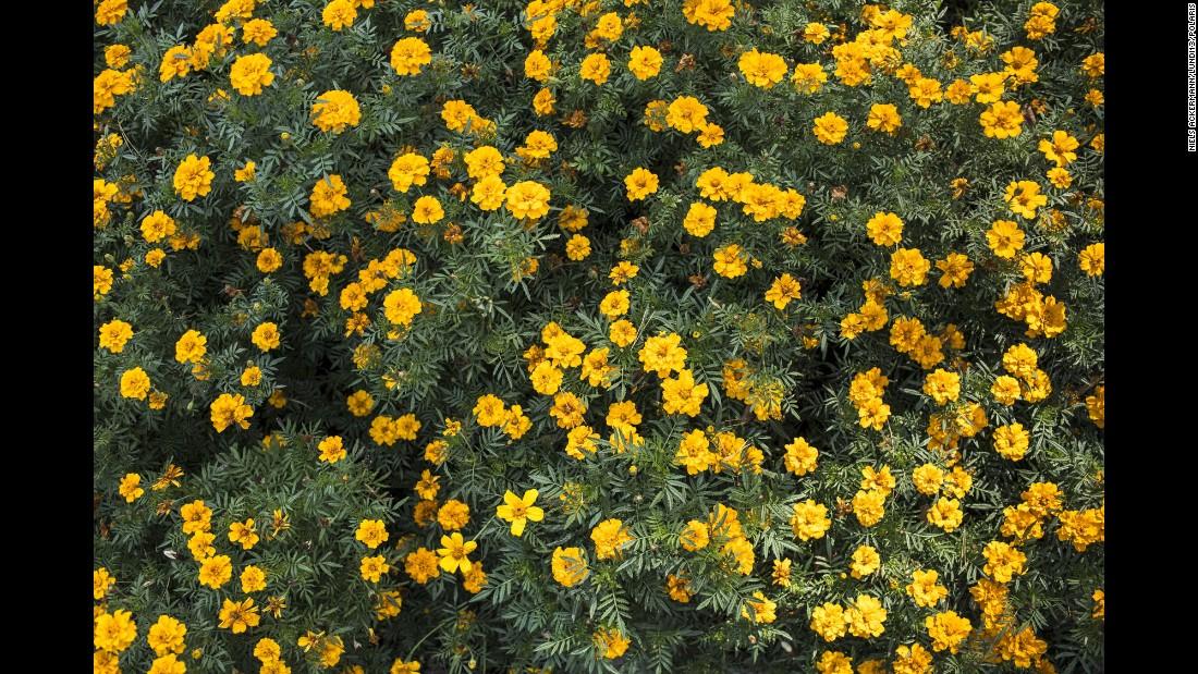 Flowers bloom in Slavutych's central park.