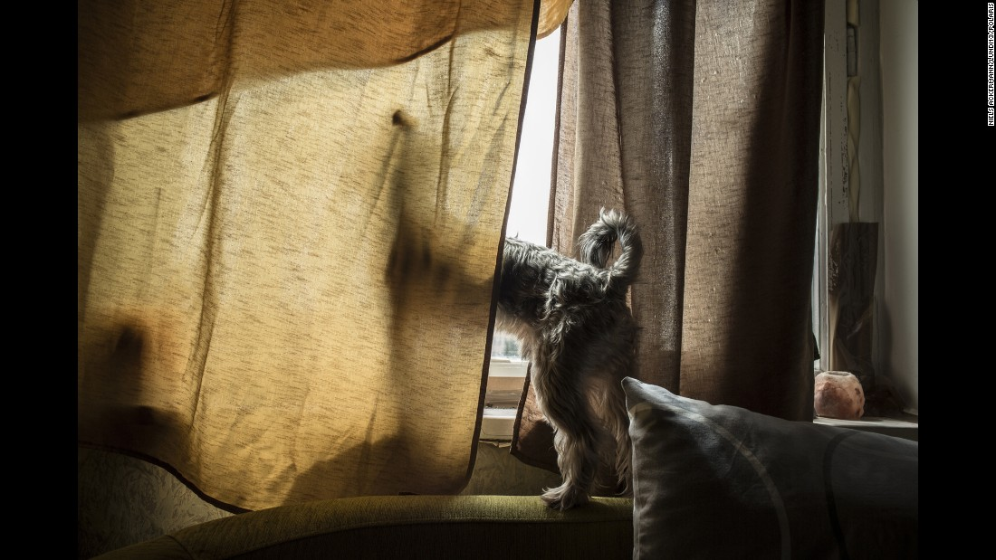 Zhenya's dog looks out the window.