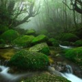 japan yakushima asia treasures