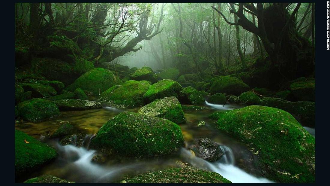 """On Yakushima Island, Japan's lush Shiratani Unsuikyo Gorge is said to have inspired the Studio Ghibli animated film """"Princess Mononoke."""""""