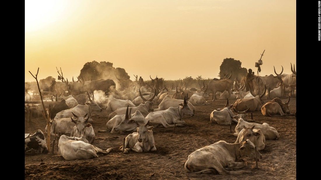 Dawn breaks over a Mundari cattle camp. The animals are the main source of sustenance for the nomadic tribe located on the banks of the Nile.
