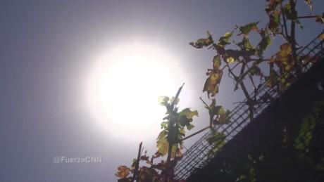 cnnee show seg a for web fuerza en movimiento argentina wine_00004325
